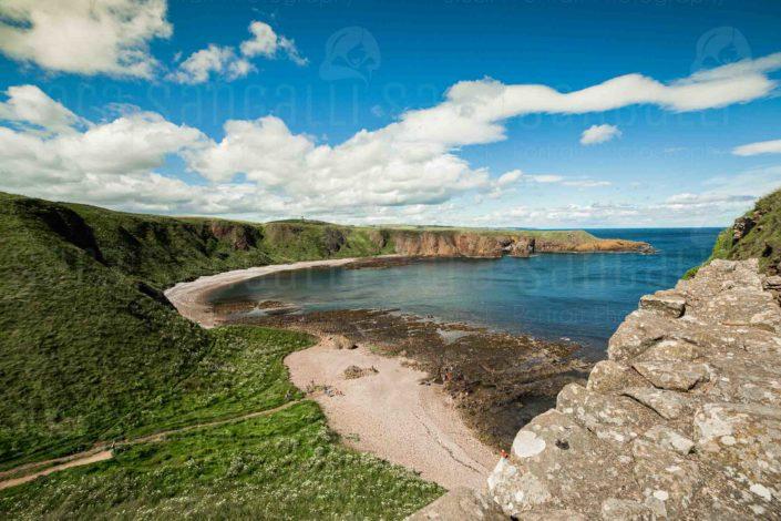 the Aberdeenshire Coast, Aberdeenshire, Scotland, near Dunnottar Castle
