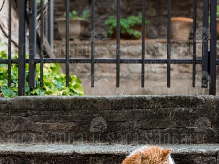 ginger cat on stone stairs