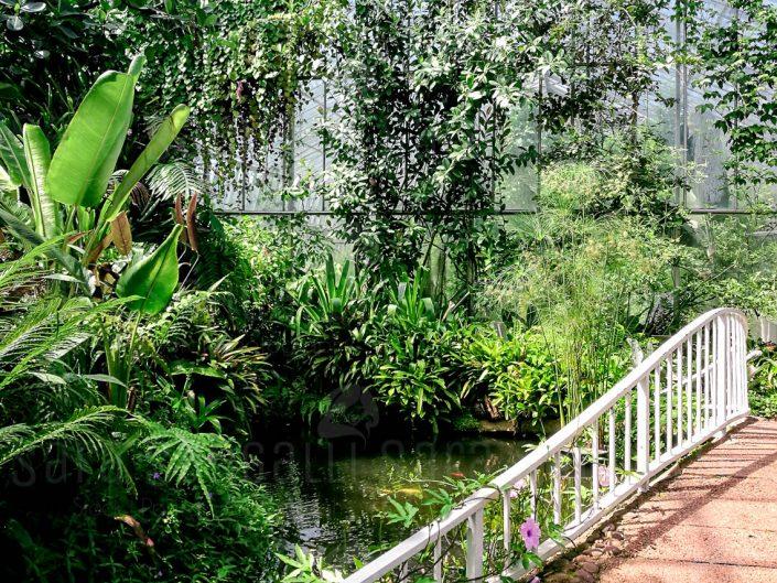 Ferns and Fossils House. Giardino Botanico Reale di Edimburgo