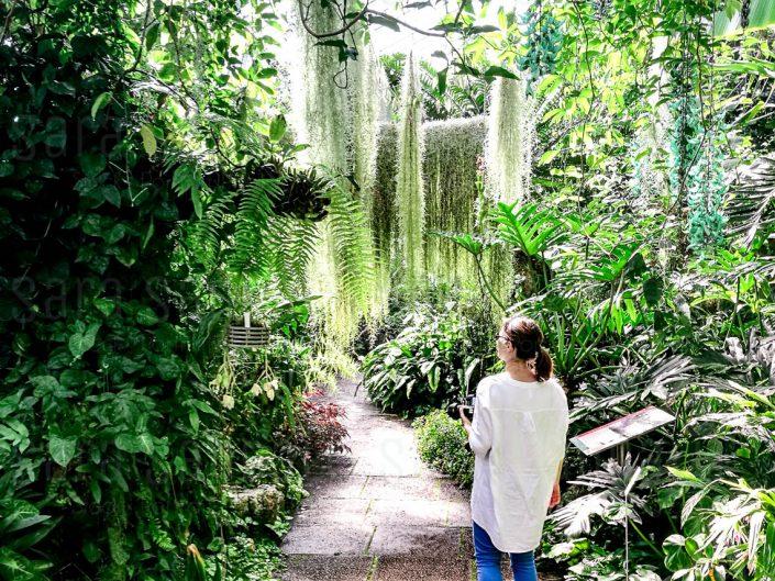 Orchids and Cycads House. Giardino Botanico Reale di Edimburgo