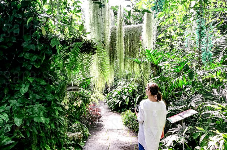 Royal Botanic Garden Edimburgh